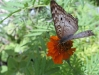 Stinky_Suzie_and_butterfly_032