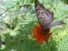 Stinky_Suzie_and_butterfly_032