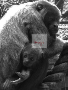 With Logo BLACK AND WHITE zoo 047
