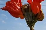 Under the Orange Flower