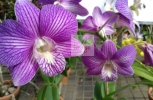 Stripe Purple Flower