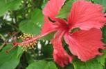 garden_plants_025